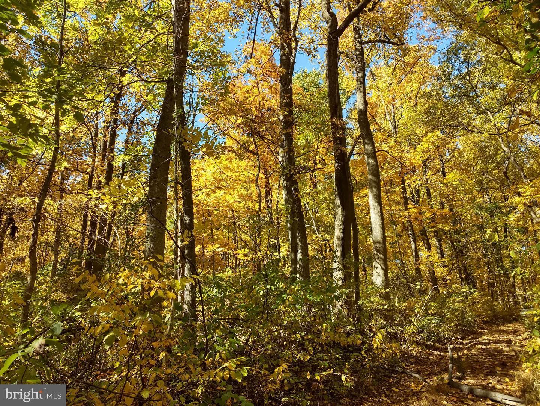 Land for Sale at 0 Blue Ridge Mountain 0 Blue Ridge Mountain Paris, Virginia 20130 United States