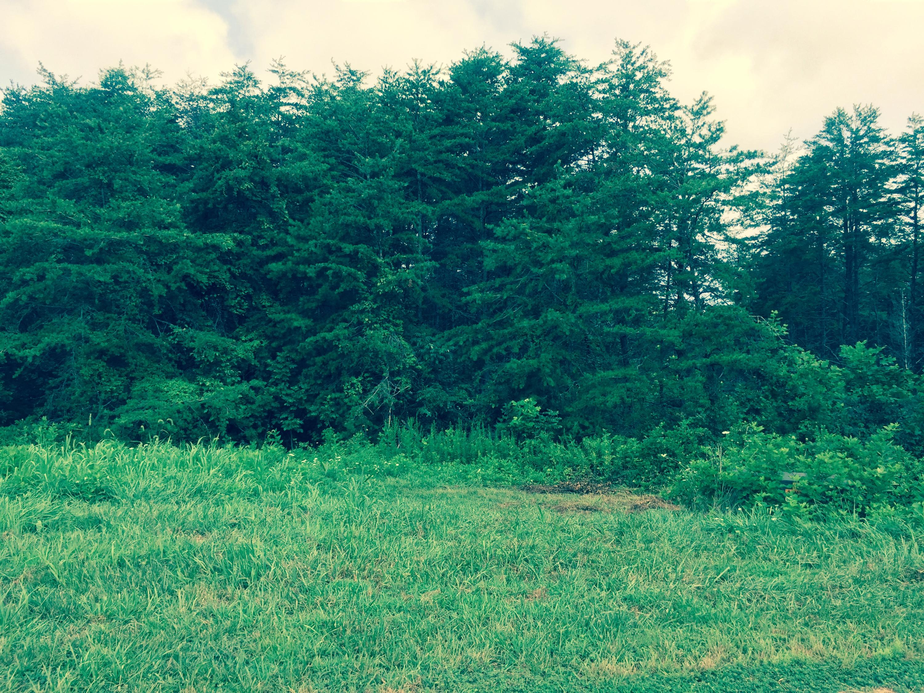 Lot 8 , Moneta, VA, 24121