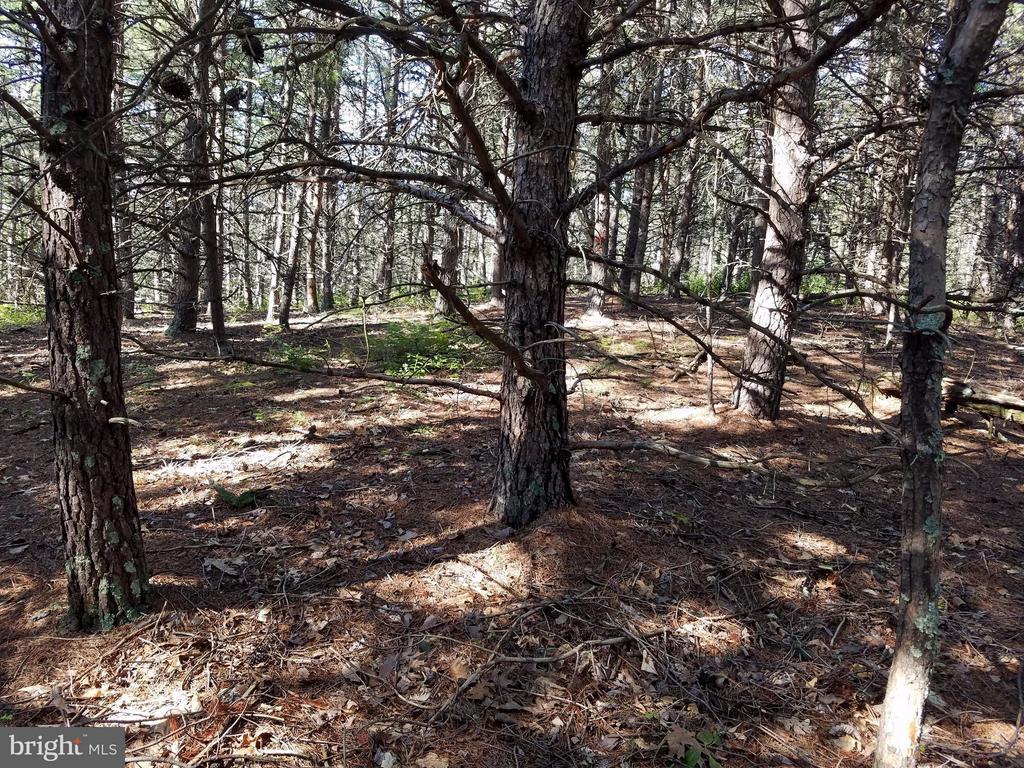 275 Black Oak, Moorefield, WV, 26836