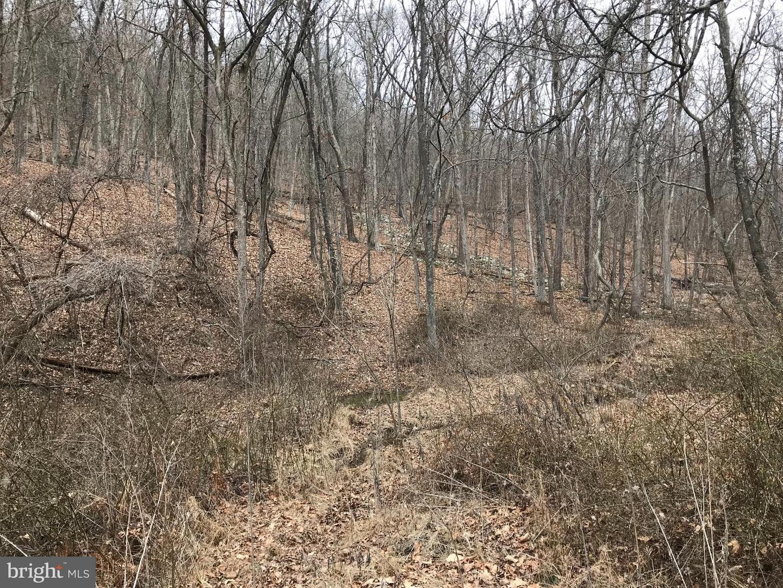 High Knob, Old Fields, WV, 26845