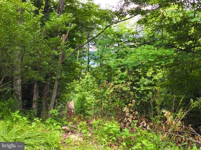 North Point Rd LOT 1, Davis, WV, 26260