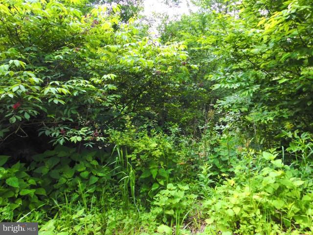 Lot 125 North Point Rd, Davis, WV, 26260