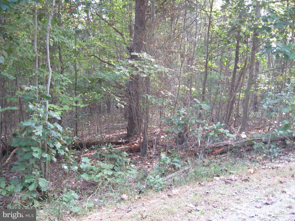 Spook Hollow Lane, Berkeley Springs, WV, 25411