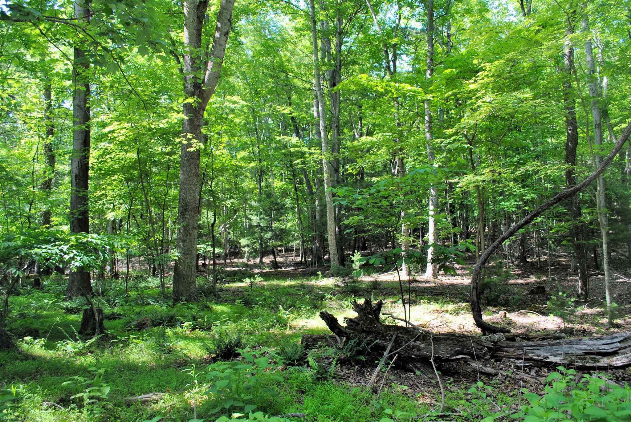 TBD 19.8 Ac  Woods On The Lake,  Radford, VA