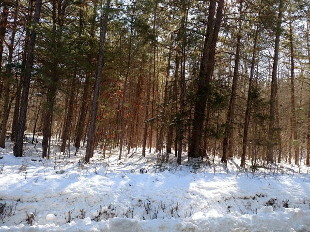 633  Lone Pine Rd,  Crewe, VA