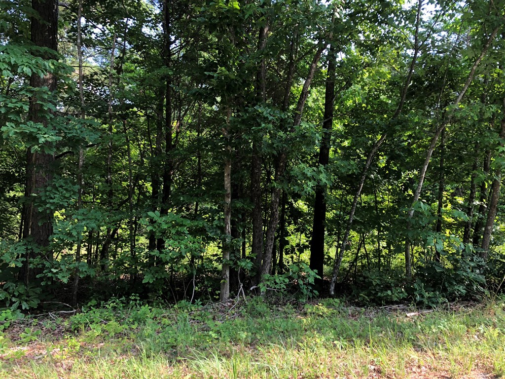 Lot 9 Lewis Ferrell Road, South Boston, VA, 24592