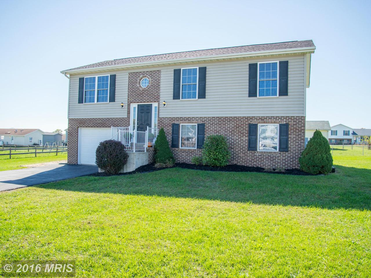 141  Thayers Gull,  Martinsburg, WV