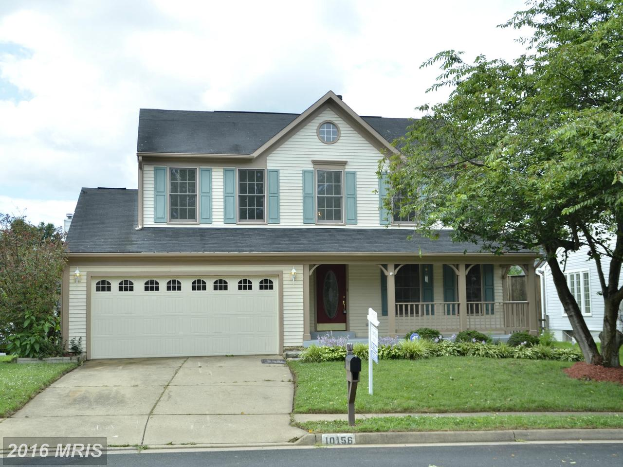 10156  Strawflower,  Manassas, VA