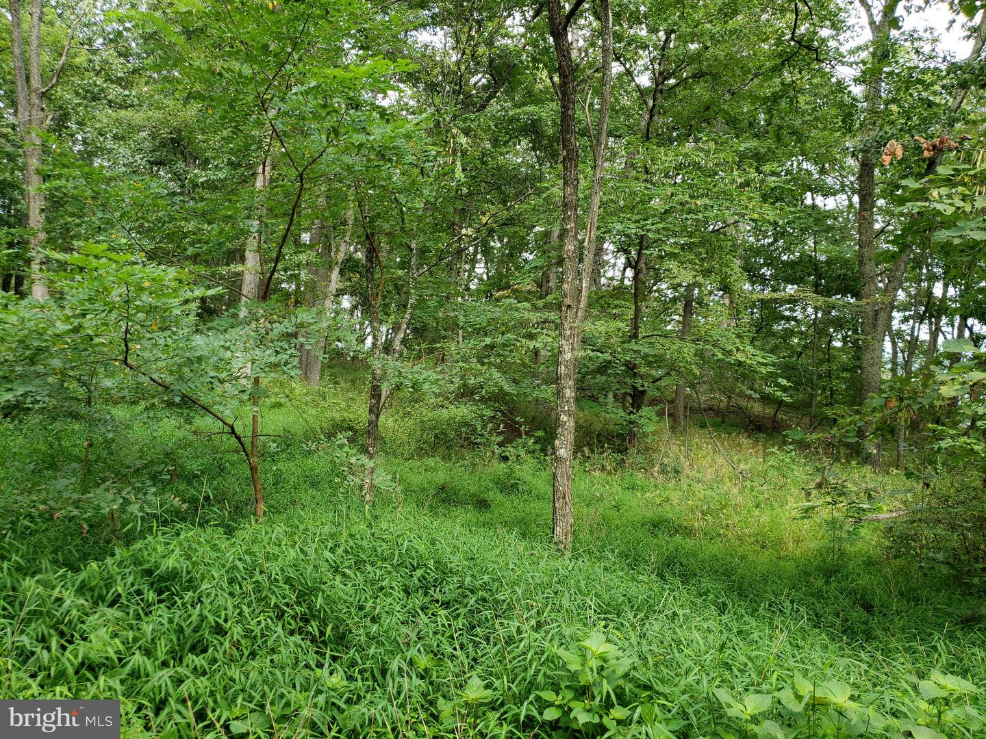 Lot L Mayflower, Capon Bridge, WV, 26711