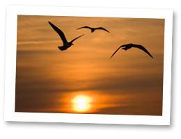 Ocean City Maryland vacation rentals